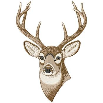 Buck Head Coloring Pages Images amp Pictures Becuo