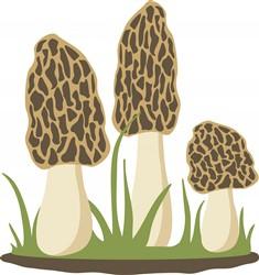 Morel Mushrooms Print Art