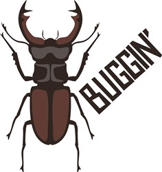 Buggin Beetle Print Art