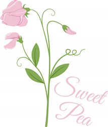 Sweet Pea Print Art