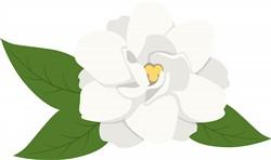 Gardenia Flower Print Art