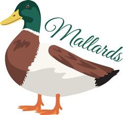 Mallards Print Art