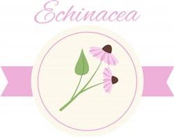 Echinacea Print Art
