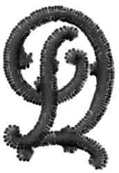 Vine Font  d embroidery design