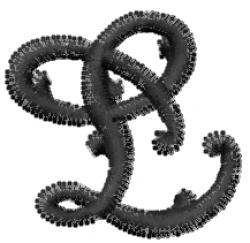 Vine Font  l embroidery design