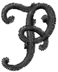Vine Font  p embroidery design