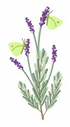 Lavender Butterfly embroidery design
