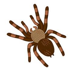 Tarantula embroidery design