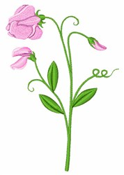 Sweet Pea Flower embroidery design