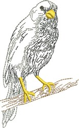 Sketched Parrot embroidery design