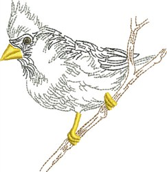 Sketched Cardinal embroidery design